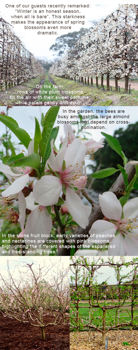 Blossoms-blog-FINAL