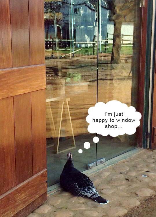 Window-shopping-blog