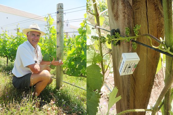 Fighting insects biologically at Babylonstoren