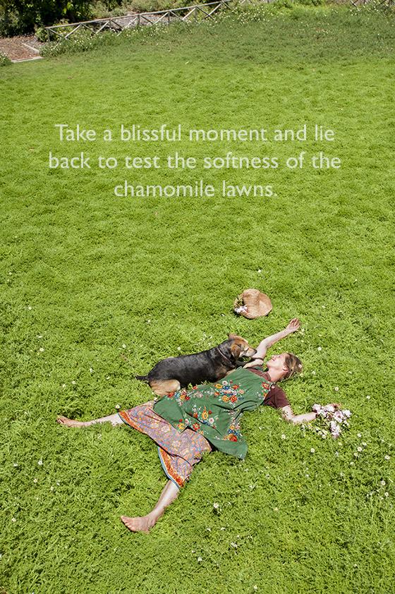 Chamomile Lawn At Babylonn