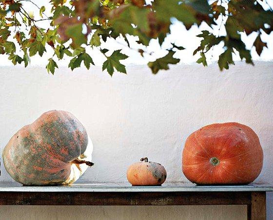 A display of Babylonstoren pumpkins