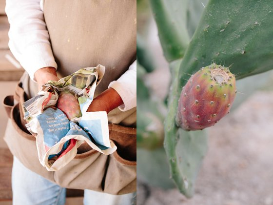 Getting rid of prickly pear thorns with the use of newspaper