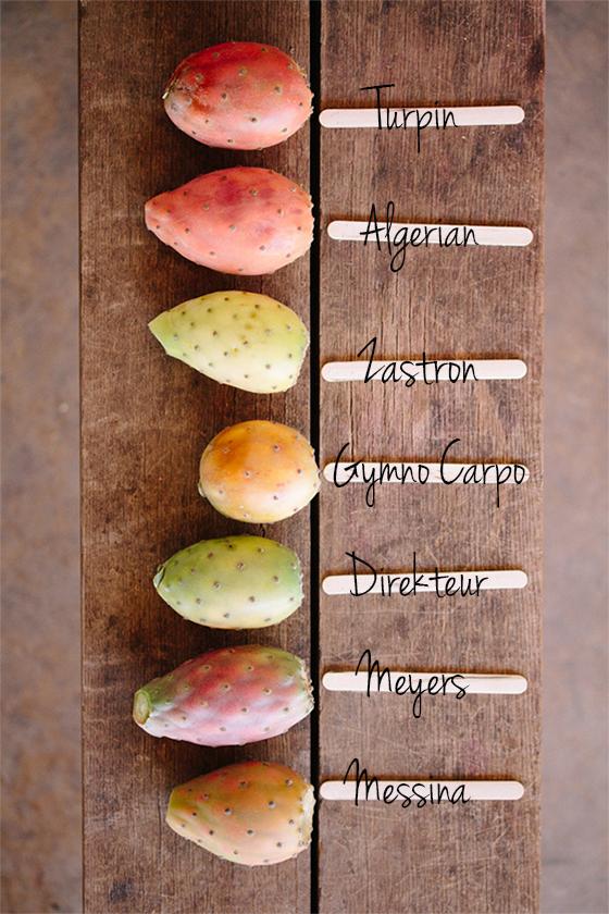 Main Image Prickly Pear