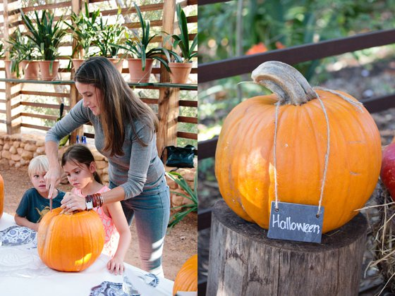 Halloween Pumpkin for Pumpkin Carving at Babylonstoren