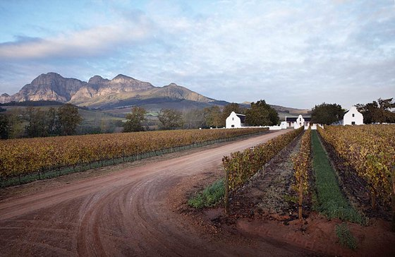 Beautiful view of Babylonstoren