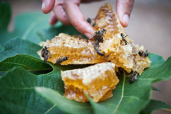 Fresh honeycake