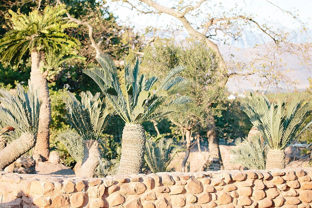 Cycad collection at Babylonstoren