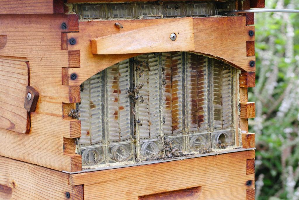 Honeybee Flow Hives