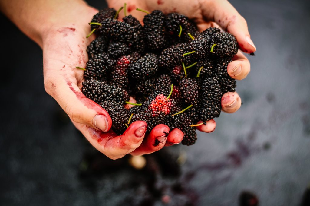 Fresh ripe mulberries