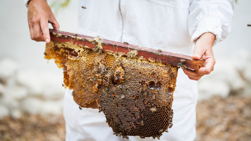 bees-honeybees-cape-honeybees-beekeeping-save-the-bees-pollination-south-africa-beekeepers