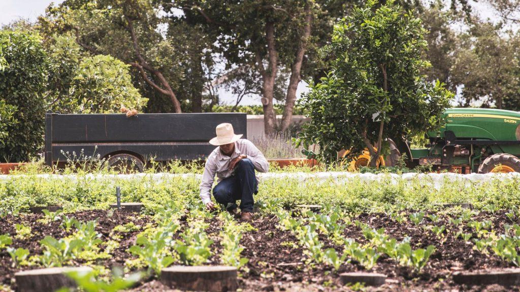 babylonstoren-workshops-2021-cape-winelands-cape-town-franschhoek-south-africa-things-to-do-in-franschhoek-beekeeping-gardening-learn-how-to-garden