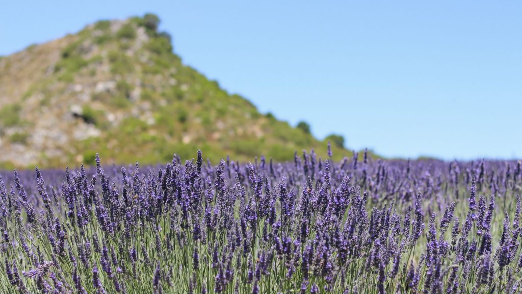 babylonstoren-workshops-2021-cape-winelands-cape-town-franschhoek-south-africa-things-to-do-in-franschhoek-beekeeping-gardening-learn-how-to-garden-gardening-lavender-essential-oils