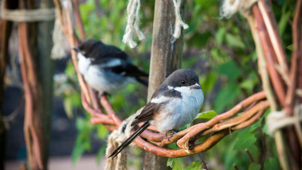 babylonstoren-workshops-2021-cape-winelands-cape-town-franschhoek-south-africa-things-to-do-in-franschhoek-beekeeping-gardening-learn-how-to-garden-birdspotting-birds