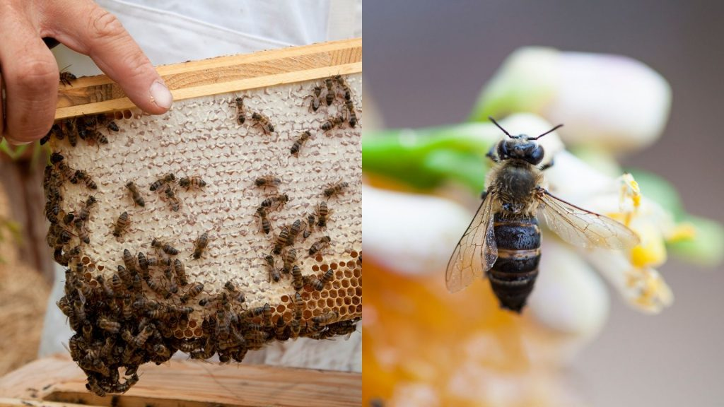 How-to-create-an-ideal-bee-habitat-in-your-own-garden-Babylonstoren-Franschhoek-Cape-Winelands-World-Bee-Day-beekeeping-for-beginners-beekeeping-at-home-bees-save-the-bees-pollinators