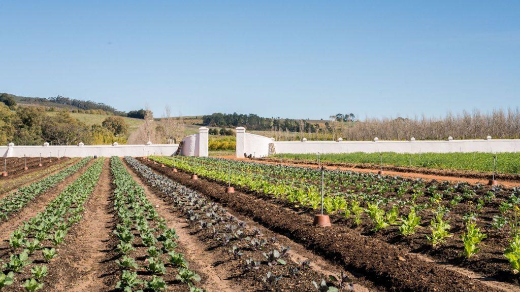 babylonstoren-garden-the-walled-kitchen-garden-moestuin-at-Babylonstoren-gardening-kitchen-garden-inspiration-garden-to-table-farm-to-fork